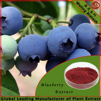 Best selling blueberry extract Anthocyanins Blueberry Extract Powder