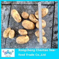 New crop fresh yellow potato