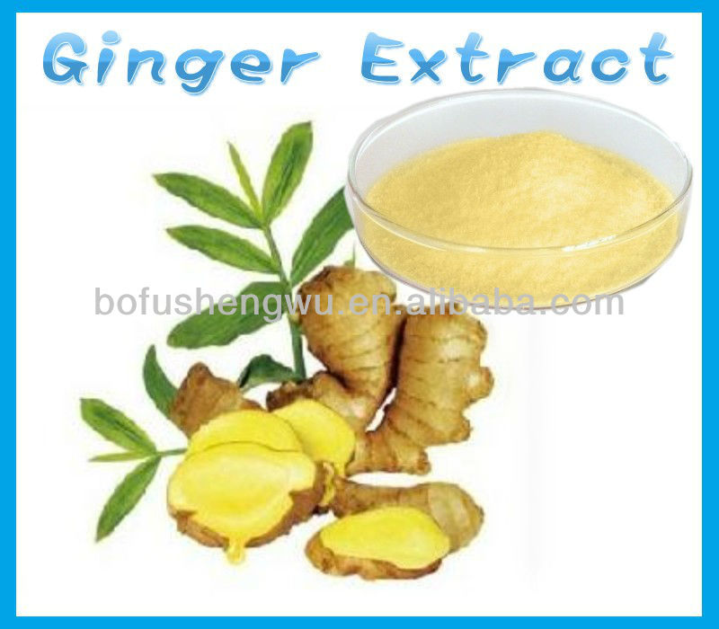 Manufacture high quality 100% Natural Ginger Dry Extract