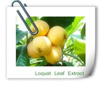 Herbal Extract Pure Natural Loquat Leaf Extract,Ursolic acid 25%-98%