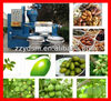 /product-detail/advance-design-full-automatic-avocado-oil-press-machine-6yl-160a-593986579.html