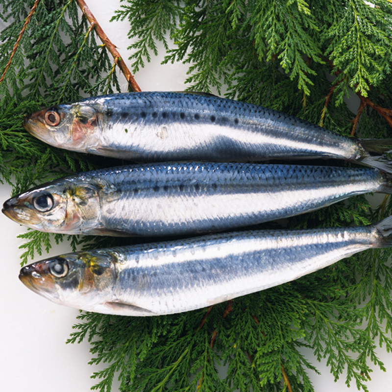good price Scomber japonicus frozen 300/500g mackerel prices,pacific mackerel
