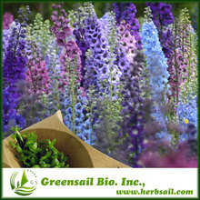 Larkspur Delphinium seed blue purple color