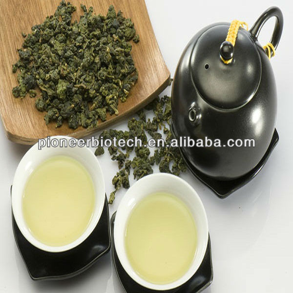 Oolong Tea Extract from GMP ISO HACCP certified manufacture