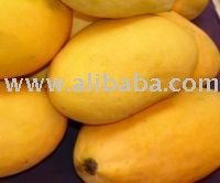 Fresh Indian Mango Alphonso / Dashehri / Chaunsa / Kesar FRESH MANGO INDIA