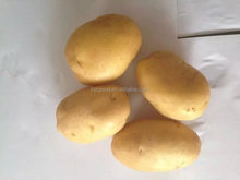 export quality 2015 crop factory price of fresh potatoes for sales