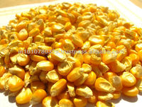 Yellow Corn 2012-13