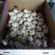 new crop garlic fresh vegetables