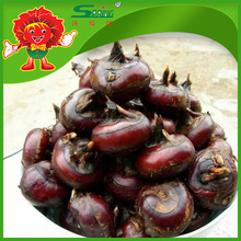 best water chestnut organic planting rich nutrition fruit vegetable
