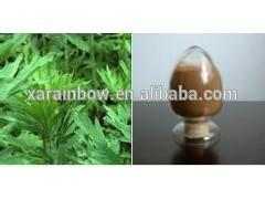 New design wormwood herb cancer fighting benefits with low price