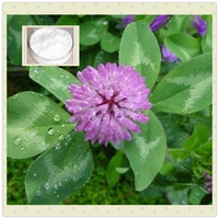 High quality Red Clover extract powder Biochanin A