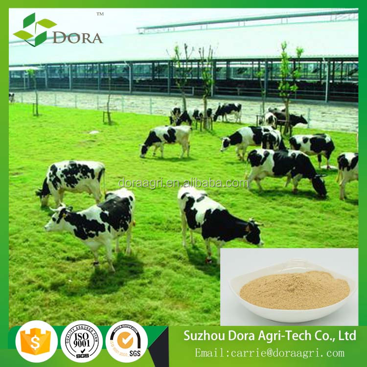 feed additives Ruminant dairy cattle feed supplement lactase enzyme