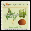 natural Radix Isatidis P.E.---Golden Supplier