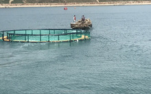 Offshore Sea Round Fishing And Crab Cage