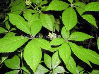 Natural Nettle Leaf Extract