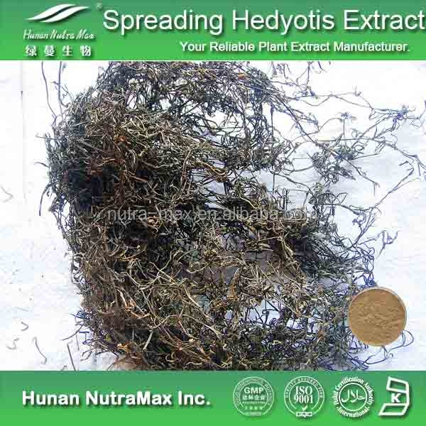 100% Natural Spreading Hedyotis Extract, Spreading Hedyotis Extract Powder, Spreading Hedyotis Powder