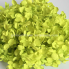 Hot sale & high quality unequaled everlasting preserved hydrangeas flower bulk sell