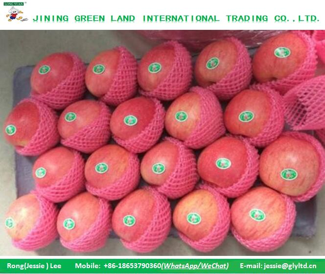 LOWEST PRICE RED QINGUAN APPLE 2016