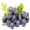 Yue Ju Factory Price Wholesale Bilberry Fruit P.e
