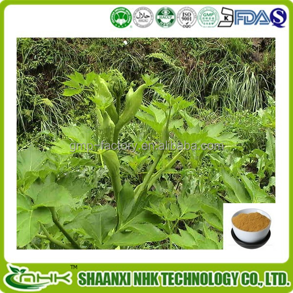 Hot selling product manufacture supply organic ashitaba / ashitaba extract powder