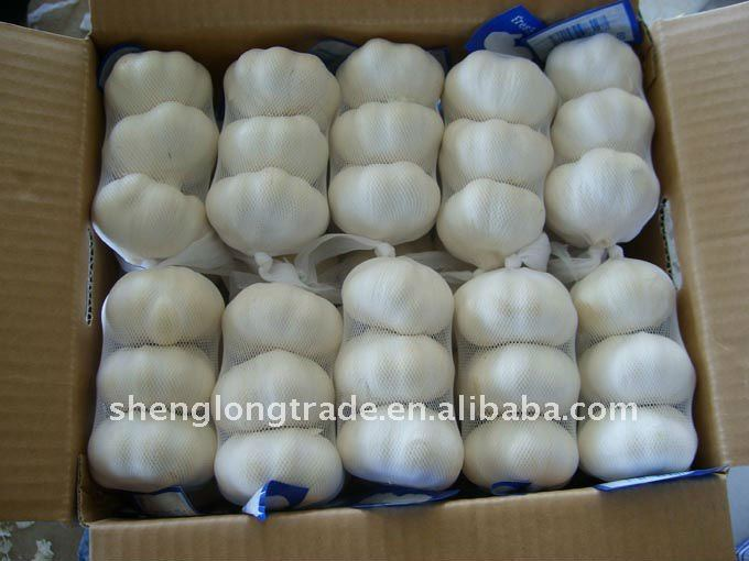 china fresh garlic price is favorable