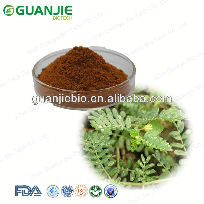 Free Sample GMP Supply Natural Plant Extract Tribulus Terrestris P.E. Powder