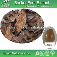 GMP Standard Manufacturer Supply Basket Fern Extract,10:1