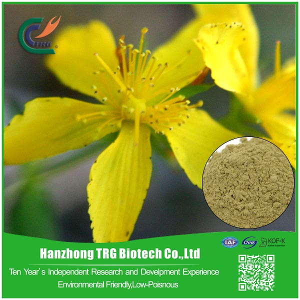 Multifunctional common st.johns wort herb for wholesales