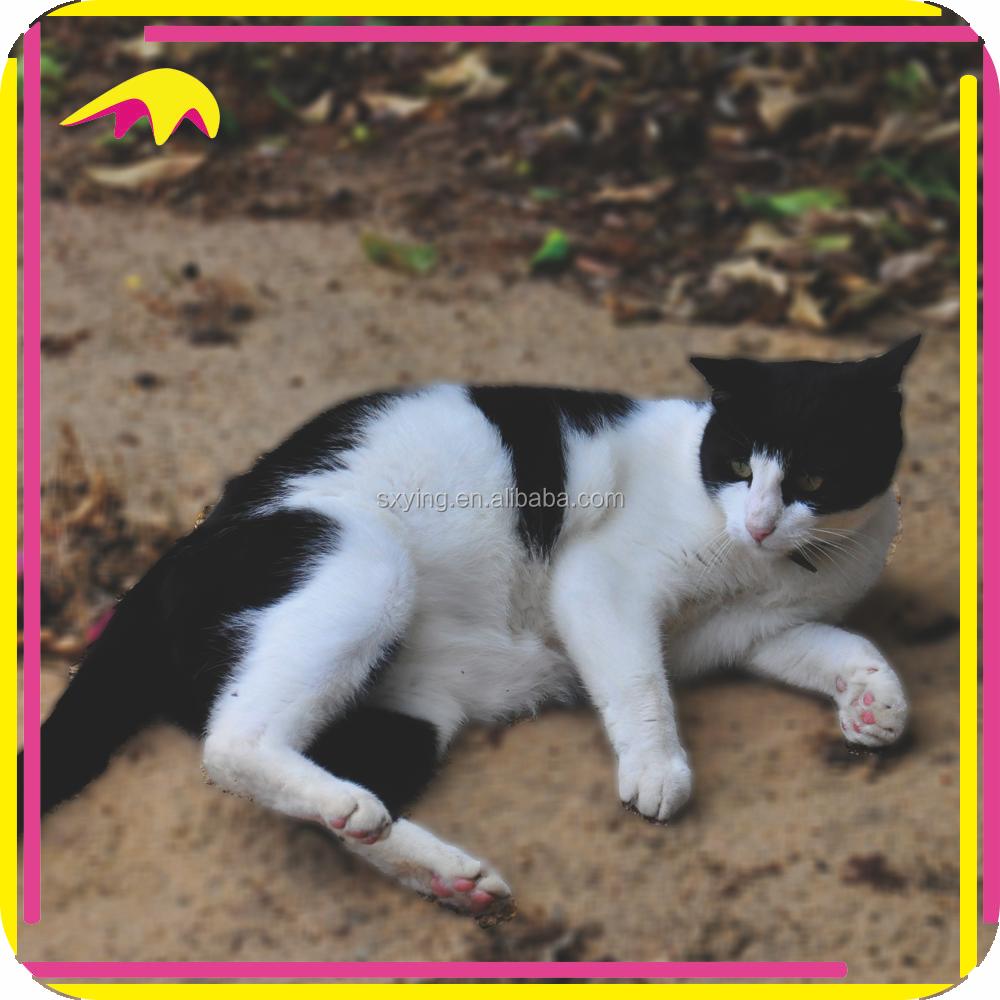 аттрактанты в кошачьем корме