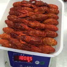 Good Taste Wholesale Frozen Whole Round Crayfish/Crawfish in Lobster