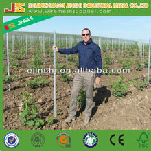 Factory provide Trellis Post Grape Stake /Low price/Vineyard Metal Trellis