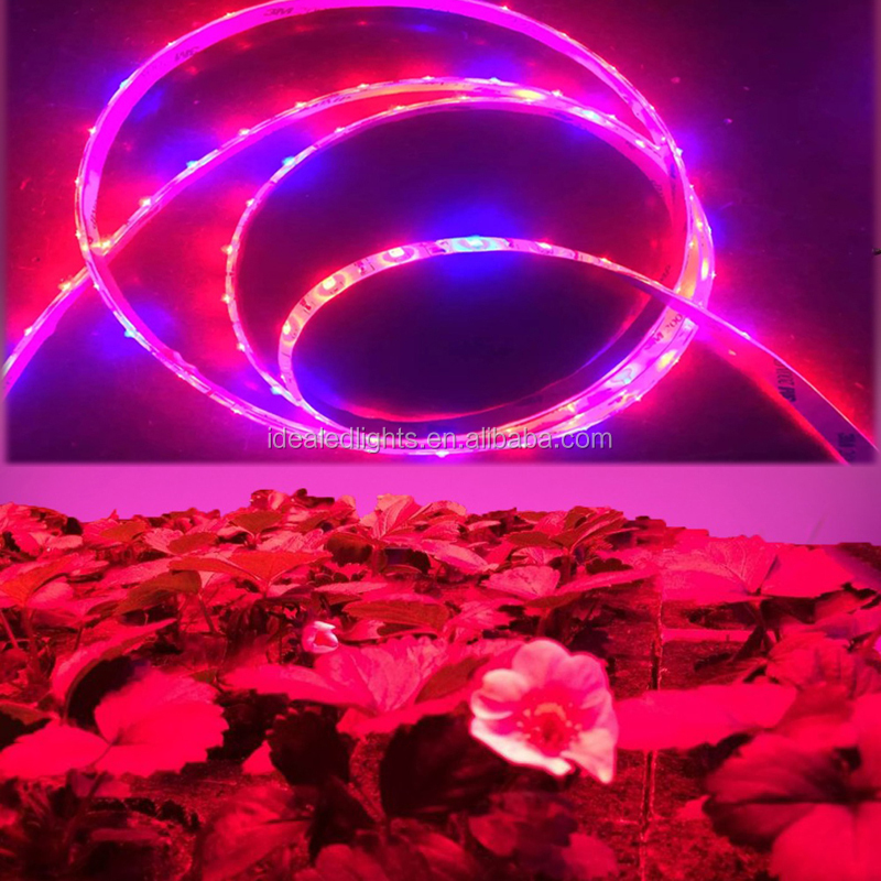 2835/5050/3528 DC 12V/24V LED Grow Light Strip/Growing Light Tape