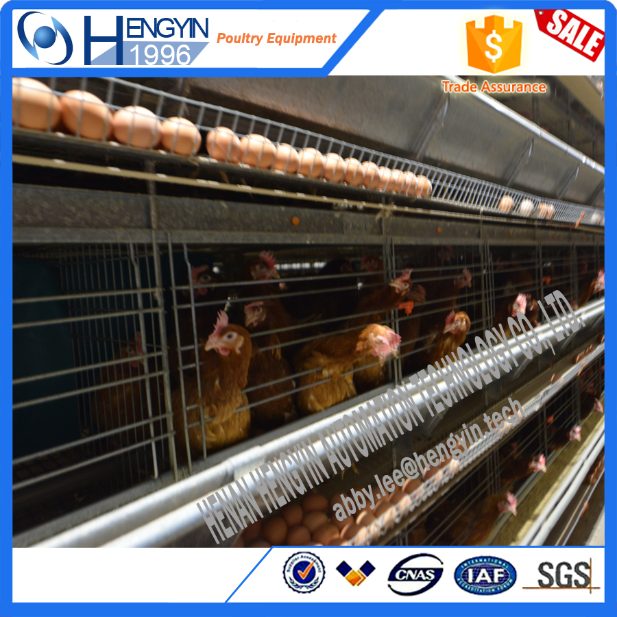 Top selling Full automatic poultry farm design H types layer quail cages for sale