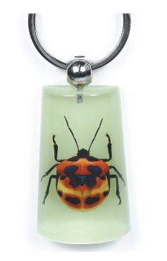 Hot sale unique REAL insect keyrings for men