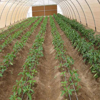 Agricultural Farm Poly Hoop Polycarbonate Tunnel