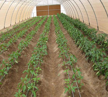Agricultural Farm Poly Hoop Polycarbonate Tunnel Greenhouse For Tomato