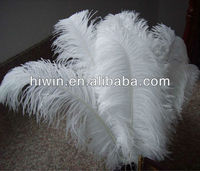 Ostrich Feathers for wedding decor