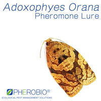 Pheromone lure for Adoxophyes Orana, Sex Pheromone Attractant