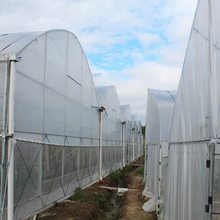 Low cost multi span used commercial greenhouses for sale
