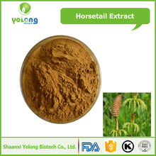 Horsetail Herb Extract 7% Silica Price Horsetail Extract Price