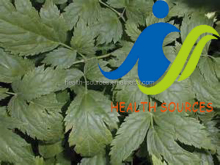 Black cohosh a wonderful product takes good care of your body