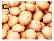 Shandong fresh potatoes