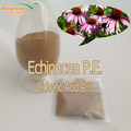 Top quality echinacea extract powder