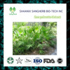 Best Quality Fatty Acids in sabal extract; serenoa serrulata fruit;saw palmetto