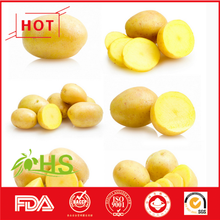 2016 China Fresh Peele Potato