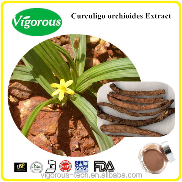 Best price Chinese tranditional herb 20:1 Curculigo orchioides powder/ Curculigo orchioides Extract