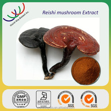 Chinese herbal medicine 10% 20% 30% polysccharides reishi extract , top quality reishi mushroom fruit body extract