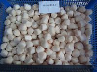 all dry frozen bay scallops for all sizes in new season