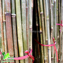 Black bamboo poles for sale