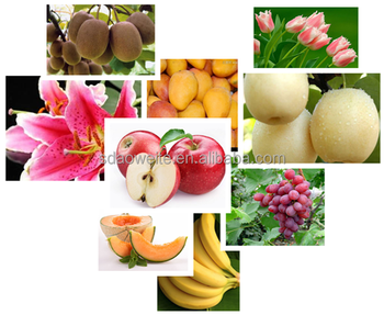 1-Methylcyclopropene, Fruits and Vegetables Antistaling Agent